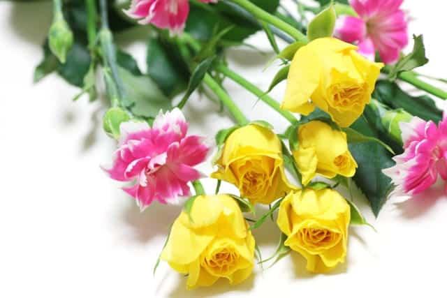 切り花バラ
